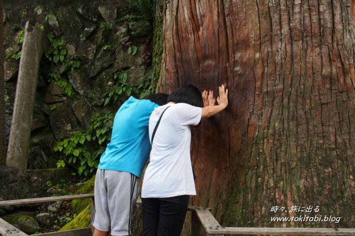 三峯神社 御神木