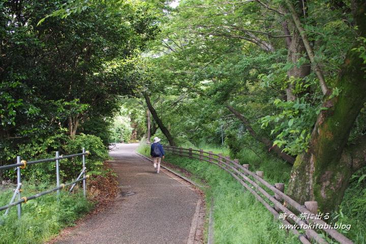 見沼たんぼ 涼し気な遊歩道