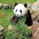 和歌山県「アドベンチャーワールド」でパンダに急接近!動物好きならオススメ