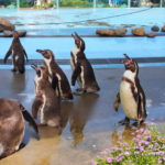 リーズナブルなのに充実!東松山「こども動物自然公園」は動物200種で埼玉一