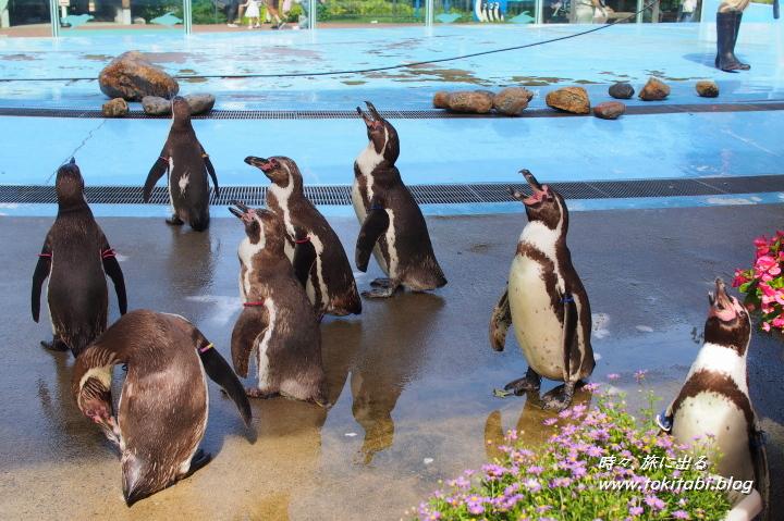 こども動物自然公園 フンボルトペンギン