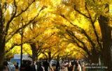 ゆっくり都心を歩こう!神宮外苑「イチョウ並木」から赤坂御用地周辺【東京都】