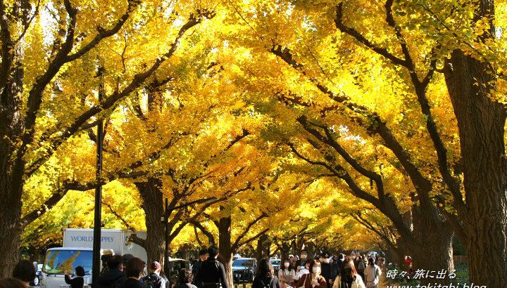 東京を歩こう!明治神宮外苑名物「イチョウ並木」~赤坂御用地周辺