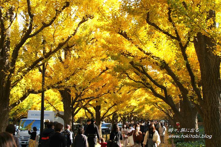 神宮外苑いちょう並木の紅葉