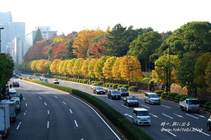 青山通りと赤坂御用地の木々の色づき