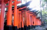 併せて訪ねたい!人気の「伏見稲荷大社」と、紅葉絶景の「東福寺」【京都】