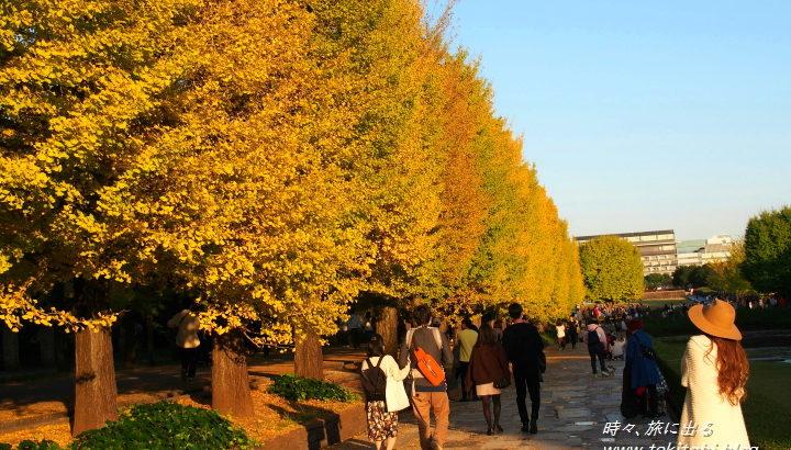 秋、黄金に輝く!【昭和記念公園】のイチョウ並木と、コスモスも美しい