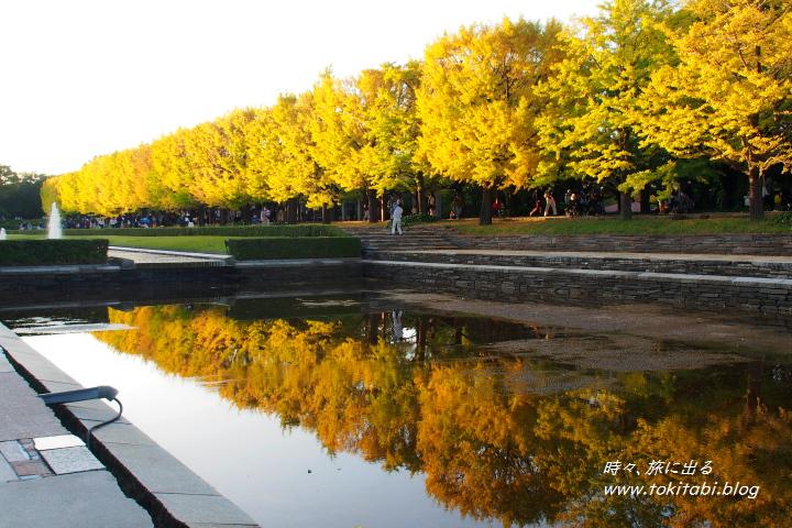 国営昭和記念公園 カナールのイチョウ並木