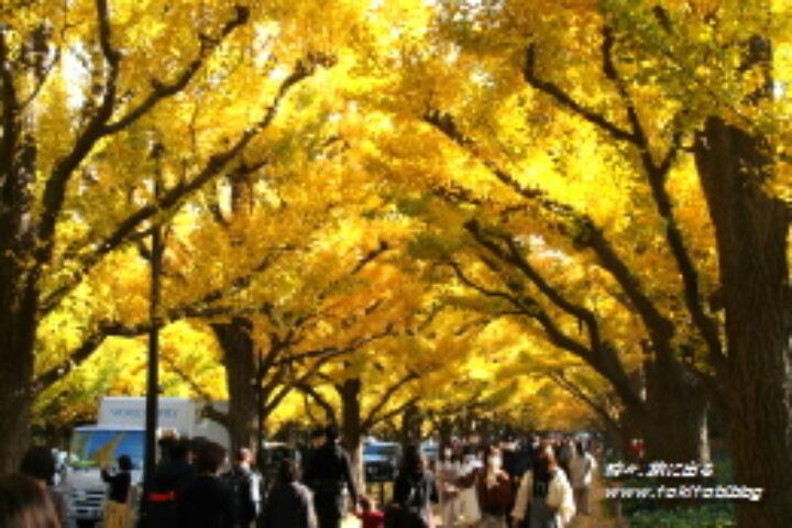 神宮外苑「イチョウ並木」から迎賓館赤坂離宮まで、赤坂御用地周辺を歩いてみよう!