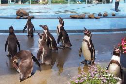 埼玉一でかい「こども動物自然公園」は動物近すぎ!コアラ、レッサーパンダ、ペンギンに接近!