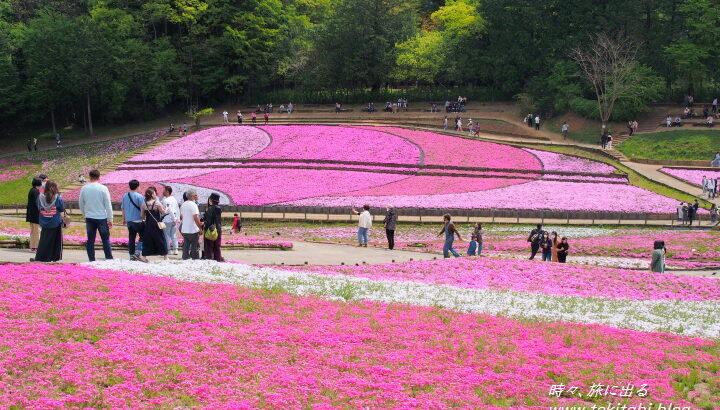 秩父市「羊山公園」は芝桜が武甲山をバックに色鮮やか、近隣スポットも紹介【埼玉県】