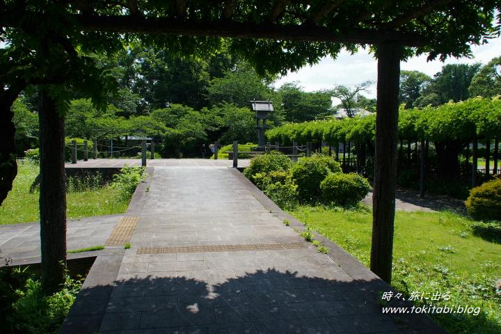 加須市「ふじとあじさいの道」